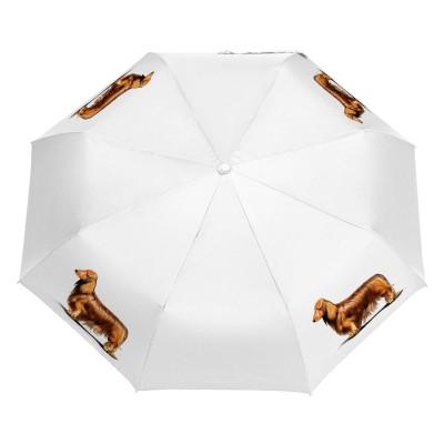 Parasol Border Collie